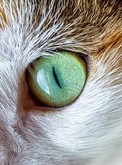 cat eye (Vanilla Photographie) Tags: macro green eye animal cat nikon reptile tiger felin
