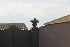 Krukke (Benny Hnersen) Tags: holiday plant plante pot greece griechenland ferie sivota krukke syvota 2015 augsut grkenland