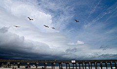 A stormy day at Tybee Island GA - Explore '15 # 137 - 9-2-2015 (Meridith112) Tags: summer sky cloud storm pelicans clouds ga georgia pier nikon august bluesky pelican explore tybee tybeeisland thunderstorm savannah storms thunderstorms 2015 pelecanuserythrorhynchos explored tybeepier nikon2485 nikond610 explore922015