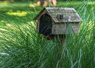 Mossy mailbox