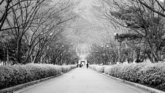 Winter Korean Park (Ibrahim Yussop) Tags: park street travel trees winter people panorama white snow black landscape photography bush path south places korea korean walkway passion bnw pathway rok