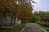 Herbstliche Landschaft. Bunte Beeren der Eberesche. (sibwarden) Tags: mountain landscape colorful berries ash beeren landschaft autumnal bunte eberesche herbstliche