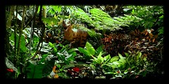 the land that time forgot 5. (milomingo) Tags: plant fern green nature animal wisconsin garden model dinosaur indoor exhibit milwaukee tropical domes prehistoric velociraptor carnivore reptilian thedomes mitchellparkconservatory