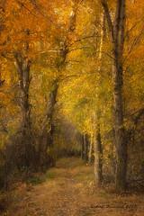 The Path Least Taken (Happy Photographer) Tags: autumn fall leaves path dream wyoming amyhudechek