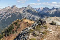 20151003-IMG_9939 (Ken Poore) Tags: washington hiking cascades larches northcascades geolocation maplepassloop geocity camera:make=canon exif:make=canon goldenlarches geocountry geostate exif:lens=ef24105mmf4lisusm exif:focallength=40mm exif:aperture=ƒ90 exif:model=canoneos6d camera:model=canoneos6d exif:isospeed=100 geo:lon=12075883 geo:lat=48499955