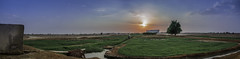 DSC_0560 (mlahsah) Tags: blue sunset panorama tree water grass clouds landscape nikon outdoor farm ngc d750 farmer sa ksa ماء شجرة السعودية مزرعة عشب بانوراما مزارع sabya صبيا nikond750