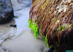 VenturaTidePools (mcshots) Tags: ocean california travel autumn sea usa seaweed beach nature water colors coast sand rocks stock sealife socal intertidal mcshots tidepools venturacounty beachcombing