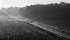 Morning Happiness (nokkie1) Tags: morning light sun white black holland water netherlands monochrome field lines contrast early ray ditch tracks eindhoven
