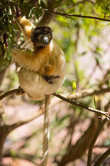 LEMUR-PARK-67 (RAFFI YOUREDJIAN PHOTOGRAPHY) Tags: park city travel trees plants baby white cute green animal fauna canon river jumping sweet turtle wildlife bricks mother adorable adventure explore lemur 5d lemurs bushes madagascar 70200 antananarivo mkiii