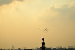 ( ) Tags: sunset sky castle clouds buildings outdoor citadel pigeons egypt cairo          pigeonsloft