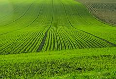 Champs (JDAMI) Tags: automne nikon perspective vert 80 tamron picardie bl somme d600 2470 alignements