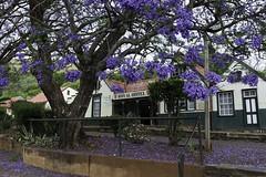 JobergtoKruger_151022_005p-sml (Stocktonlad) Tags: landscape southafrica places jacarandatree pilgrimsrest treeswoods