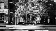 Across and Inbetween (TMimages PDX) Tags: road street city autumn people urban blackandwhite monochrome buildings portland geotagged photography photo image streetphotography streetscene sidewalk photograph pedestrians pacificnorthwest avenue vignette fineartphotography iphoneography