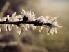 frozen_branch (Joerg Esper) Tags: kretz rheinlandpfalz deutschland de ast frost frosty frozen gefroren ice eis eifel pellenz hoarfrost bokeh winter natur nature olympus olympusomdem1 olympus124028 olympusmzuikodigitaled12‑40mm128pro