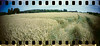 2016-07 - 042SR / 043SR - DSC_0134 (sarajoelsson) Tags: sprocketrocket panorama panoramic sprocketholes digitizedwithdslr toycamera 135 35mm 2016 plasticlens filmphotography filmisnotdead believeinfilm filmshooter film wideangle lomography lomo teamframkallning summer vacation rural roslagen lohärad color colornegatives colorfilm colorful kodak ektar c41 istillshootfilm ishootfilm july sunny
