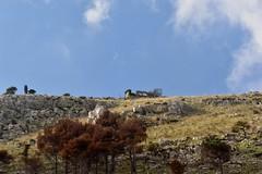 DSC_10133 (jhk&alk) Tags: italia italy sicilia sicily erice