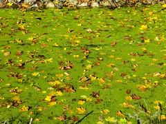 IMG_9139 (rpealit) Tags: scenery wildlife nature east hatchery hackettstown