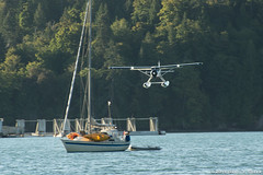 Float Plane Navigates the Boats (David J. Greer) Tags: thetis island float plane sea air landing flying morning clear sailboat harbour harbor approach water tree trees mast