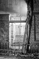 Tree and Gate (karl101) Tags: sheffield fog morning early