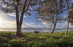 Beastie (msuner48) Tags: d750 acr5 cs4 dog beastie trees grass sky clouds water emeryvilleca outdoors nikcollection rokinon8mmf35