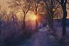 Frosty 31th (lutzheidbrink) Tags: frost sunrise nikon d5000 landscape landschaft morgen cold