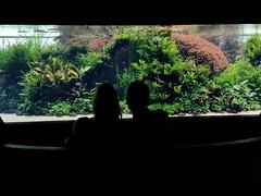 Soirée TV (LetJphotographies) Tags: télévision soirée regarder couple amoureux aquarium