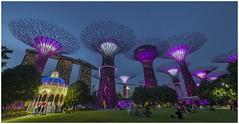 "Singapore 5007 (Fermin Ezcurdia) Tags: singapur singapore ""sudeste asiático"" skyline ""marina bay sands"" ""maryba bay"" chinatown ""barrio indio"" barrio musulman"" ""bufaflo road"" ""clarke quay"" ""orchard ""garden by ""sultan mosque"" ""kuala lumpu"" malasia ""torres petronas"" ""lake garde"" ""petaling street"" ""jalan petaling"" alor"" ""little india"" ""bukit bintang"" ""sri mahamariammam"" ""guan di"" ""kl tower"" menara"