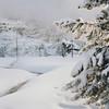 the pull of falling snow (manyfires) Tags: hasselblad hasselblad500cm square film analog mediumformat winter trees forest snow ice sunlight stream yellowstonenationalpark yellowstone wyoming