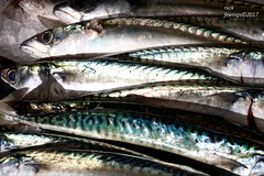 Catch of the Day (Nick Fewings 4.5 Million Views) Tags: stripes seafood sea uk 7d canon eat fishmonger 2017 january nickfewings echo bournemouth dorset quay mudeford silver shiny fin scales eyes colourful colours mackerel fish food