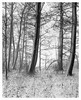 Hiding Place 4x5 - Ilford Delta 100 (magnus.joensson) Tags: sweden swedish skåne svedala blackandwhite 4x5 landscape large format forest tree snow snowing cold winter linhof technikardan 45 fujinon 125mm cmw ilford delta 100 adonal adox 1100 epson v800 scan monochrome