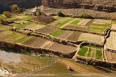 EBM-Mujer volviendo del campo (EBMFOTO - Eduardo Blanco Mendizabal) Tags: marruecos morocco travel agriculture agricultura burro donkey farming caballo hourse campo fields river rio land huerto