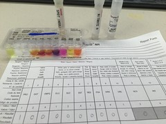 Remel Rapid NH test (ddsiple) Tags: microbiology neisseriagonorrhoeae