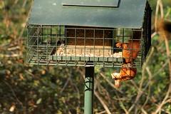 IMG_2149 (marianabmcruz) Tags: parquebiológicodegaia parquebiológico biologicalpark outdoors outdoor nature natureza animal animals fauna esquilo squirrel squirrels