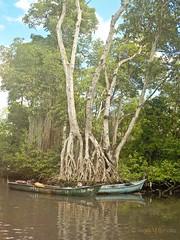 Laguna Grigri (Angela MGM) Tags: republicadominicana riosanjuan