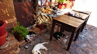 cats to Monemvasia island Greece P1130606