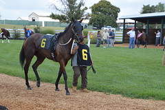 Number 6 (Krasivaya Liza) Tags: kentuckydowns franklin ky kentucky horse horses racing race downs track