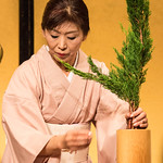 Carkeets say 'konnichiwa' to Kyoto thumbnail