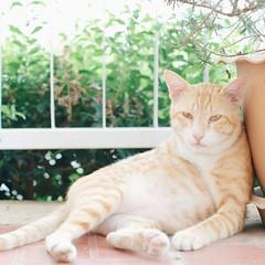 อาการหลังหวยออก 。(′︿‵。) #cat