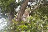 "Subido al árbol (_Galle_ (instagram: galle_foto)) Tags: republica park miguel angel photography monkey mono photo asia republic foto photos south kerala national fotos sur macaco fotografia galle hindu hinduism fotógrafo hindi thekkady periyar fotografía photograper simio gallego inidia भारत periyarnationalpark hindou republicofindia hindú ""republic hinduismo भारतगणराज्य गणराज्य gaṇarājya cheral bhārat bhāratgaṇarājya miguelagallego miguelgallego miguelangelgallego repíblicadelaindia cheralam"