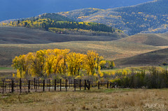 The Light of Autumn ( (Ping...) Tags: autumn light house mountain tree fall fence golden cow colorado hills aspentrees goldenlight evergreentrees goldenleaves cottonwoodtrees goldengrass coloradoautumn
