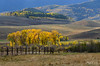 The Light of Autumn (秋之光) (Ping...) Tags: autumn light house mountain tree fall fence golden cow colorado hills aspentrees goldenlight evergreentrees goldenleaves cottonwoodtrees goldengrass coloradoautumn
