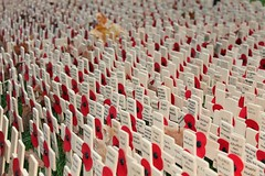 Poppies at Westminster Abbey (chelseathepanda) Tags: november london westminster abbey memorial war crosses fallen poppies ww2 rememberance soldiers ww1 12th