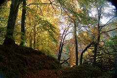 Autumn Scene.....Glen Esk (monaghan_pam) Tags: autumn trees nature glenesk