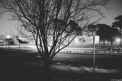 Just another night in SF! (enigmajinen) Tags: sanfrancisco longexposure blackandwhite mist fog night canon foggy parkmerced jsfotografia