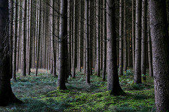 """""""Inside Forest"""" (helmet13) Tags: trees grass forest moss raw forestry timber silence spruce aoi 200faves peaceaward heartaward platinumheartaward coniferforest world100f platinumpeaceaward d800e"""