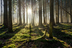 Magic forest (Sebo23) Tags: light sun for licht nebel sunrays sonne wald sonnenstrahlen canon6d canon24704l