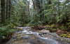 Nature's Arrangements (John Westrock) Tags: nature forest trees deceptionfalls pacificnorthwest washington canoneos5dmarkiii canonef1635mmf4lis