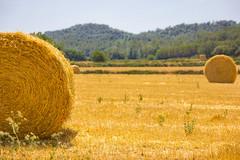_MG_7576 (Lost-Travelers) Tags: emporda baix girona catalunya paisatge paisaje