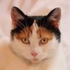 Titite (jjcordier) Tags: chat animal tête animaldomestique félin animaldecompagnie yeux