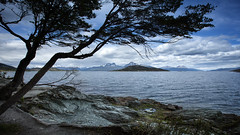 Tierra del Fuego, Argentina (pas le matin) Tags: outdoor tree plant arbre travel voyage landscape paysage seascape sea ocean patagonia tierradelfuego patagonie argentine argentina southamerica world canon 5d canon5dmkiii canoneos5dmkiii 5dmkiii